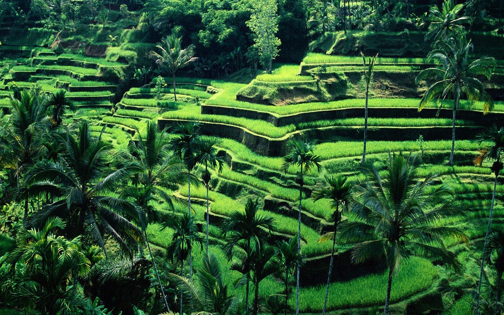 Bali myexoticdreamnet