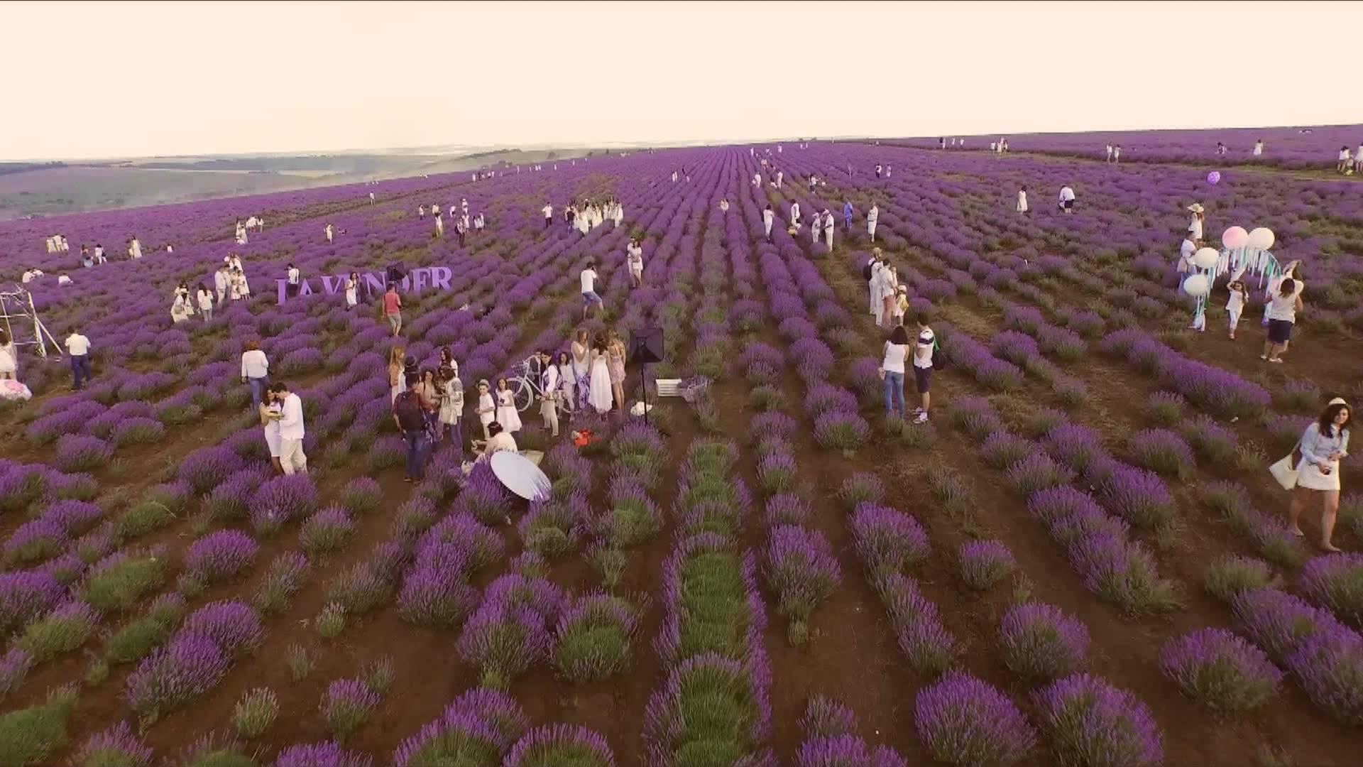 moldova-lavender-fest