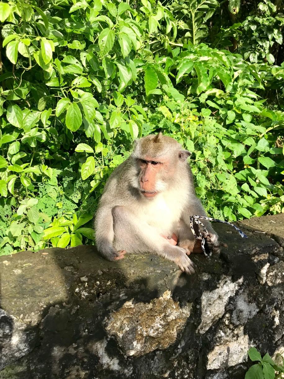 Ovidiu Muresanu Bali 1