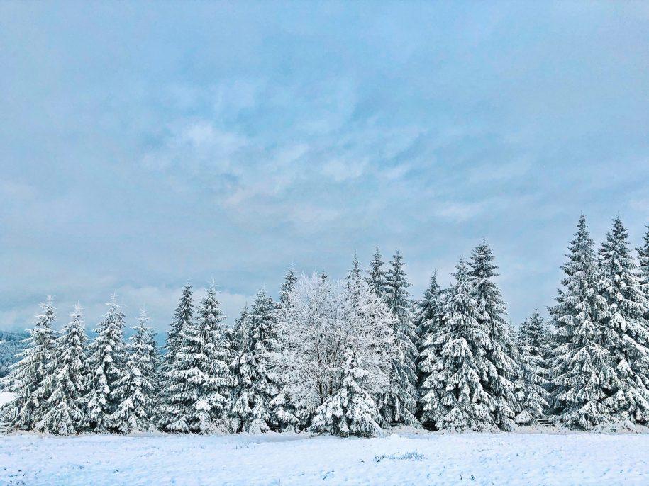 Ovidiu Muresanu Winter 2